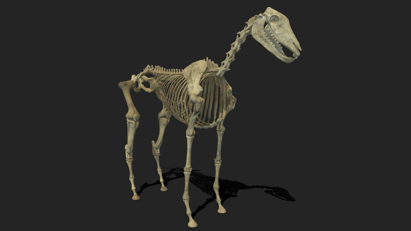 horse skeleton 3d model - turbosquid 1328753