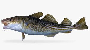 3D model cod fish