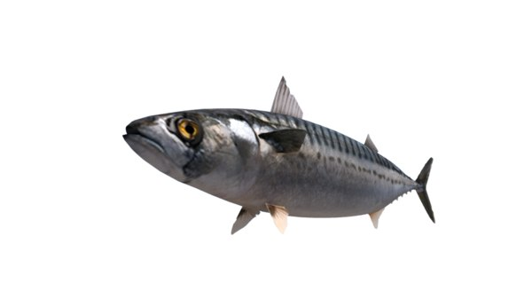 mackerel fish 3D model