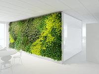 Office Greenwall B 3D model