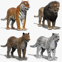 big cats fur 3D model