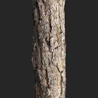 3D scanned piece pine trunk model