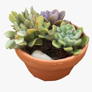 3D model small patio table plant
