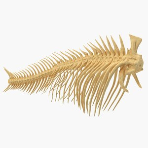 fish vertebrae bones 3D model