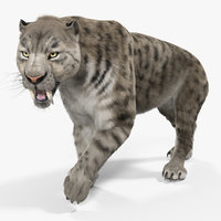 arctic saber tooth cat 3D model