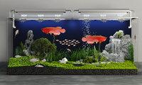 arowana aquarium 3D model