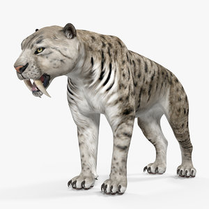 3D arctic saber tooth cat model