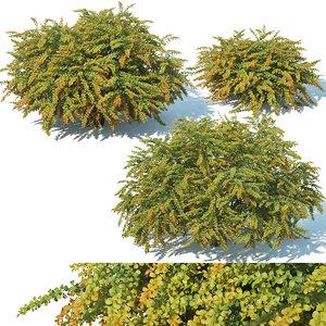 3D berberis thunbergii green