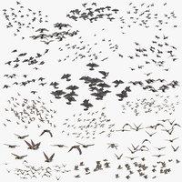 flocks ducks flying pigeons 3D