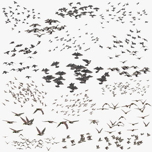 flocks ducks flying pigeons 3D