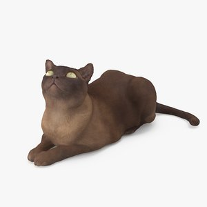 cat abyssinian 3D model