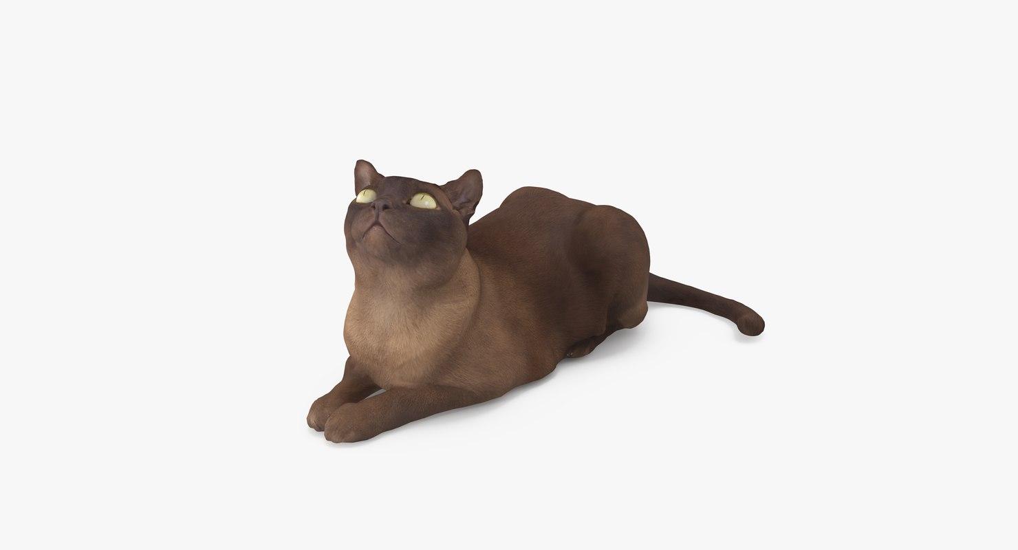 cat abyssinian 3D model