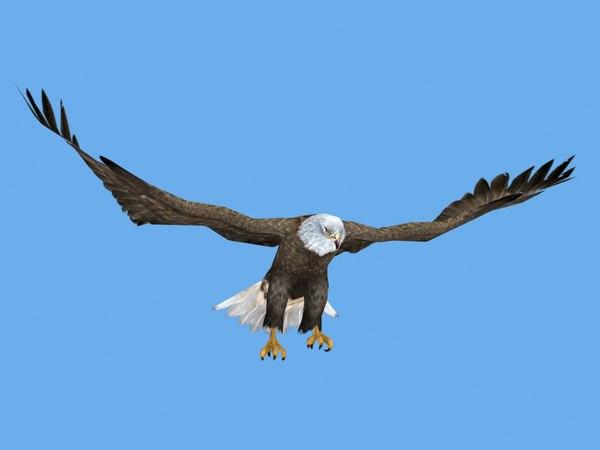 3D rigged flying eagle