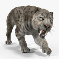 3D arctic saber tooth cat