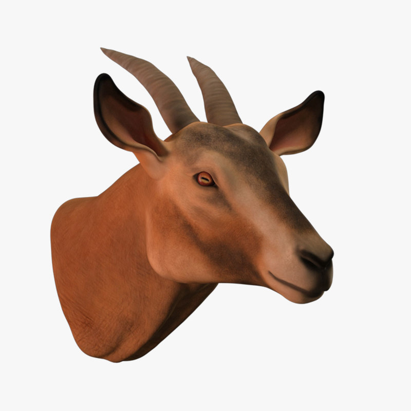3D model goat head