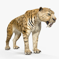 saber tooth tiger 3D model