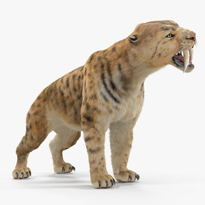 3D saber tooth tiger growls