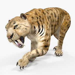 saber tooth tiger rigged 3D