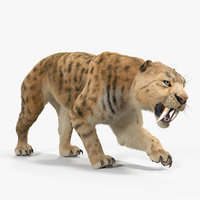 saber tooth tiger rigged 3D model