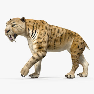 3D saber tooth tiger walking model