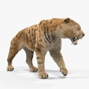 3D saber tooth tiger walking