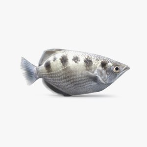 3D archerfish pbr model