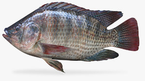 3D rainforest tilapia