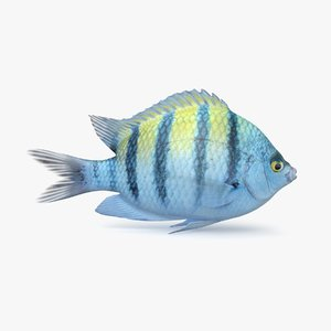 damselfish pbr model