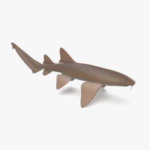 nurse shark 3D