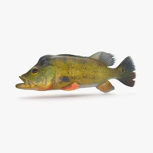 3D model peacock bass