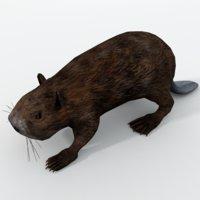 beaver 3D