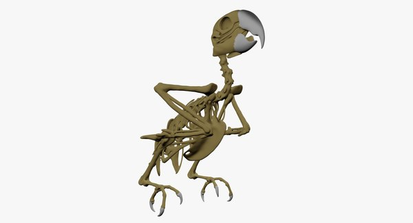 3D macaw parrot skeleton model