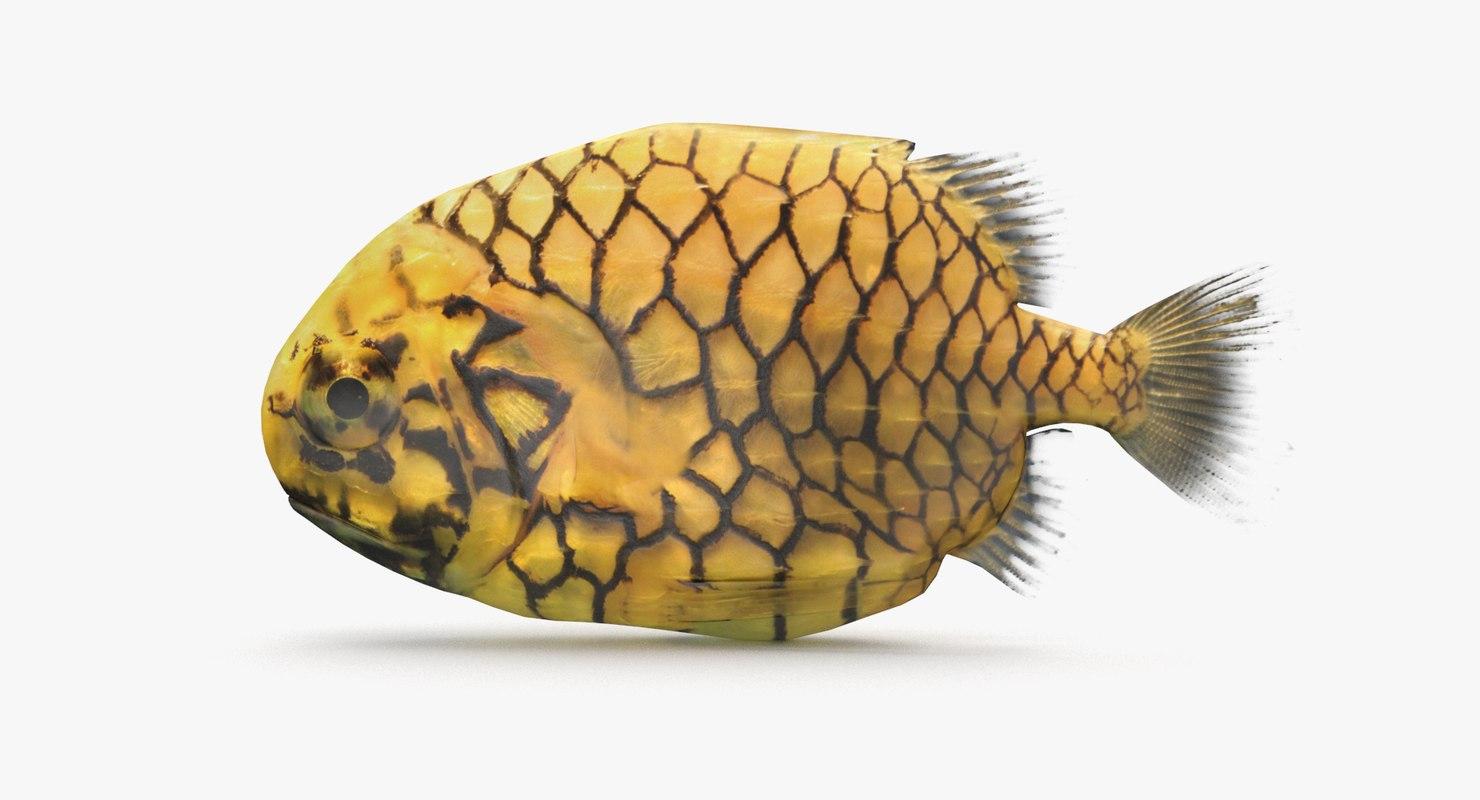 pineapple fish model