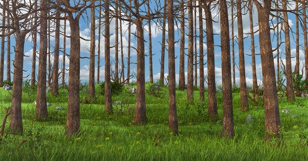 3D cartoon forest
