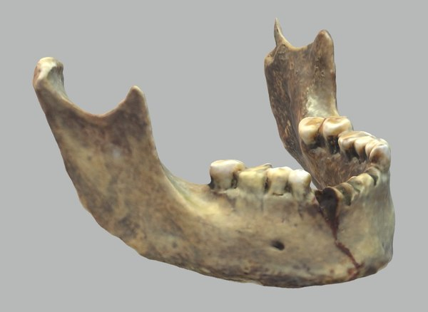 human s jaw 3D model