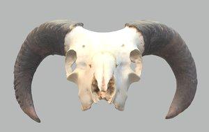 ram s skull 3D model