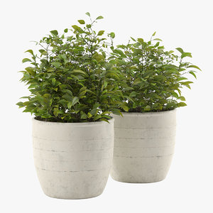 3D realistic outdoor plant pot