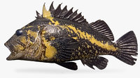 china rockfish model