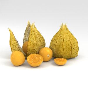 3D physalis food fruit