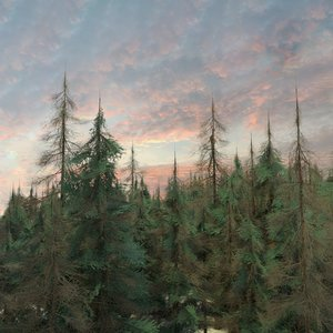 3D tall american pine trees model