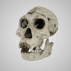 homo erectus ergaster 3D model