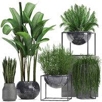 exotic plants 3D model