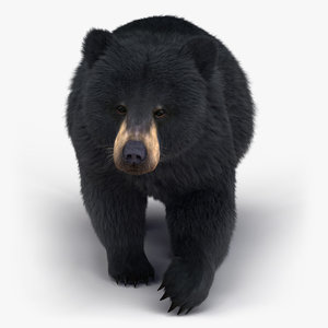 black bear rigged fur 3D model