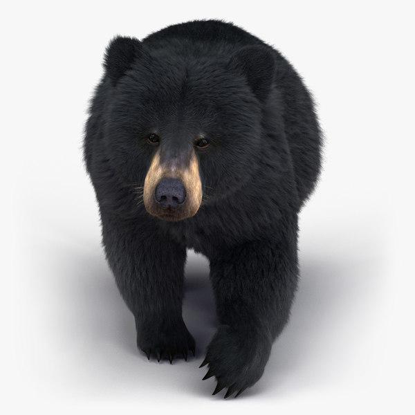 black bear rigged fur 3D model