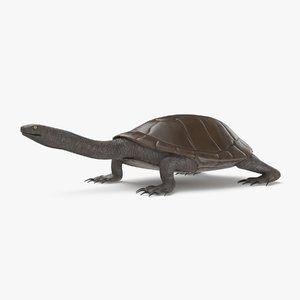 3D model snake necked turtle