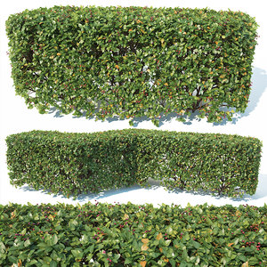 2 square shapes hedge model