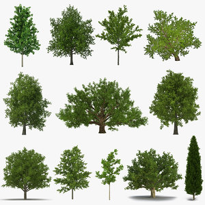summer trees 2 3D model