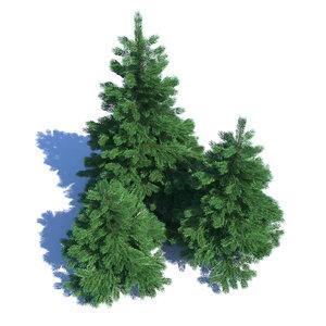 3D model fir-tree fir tree nature