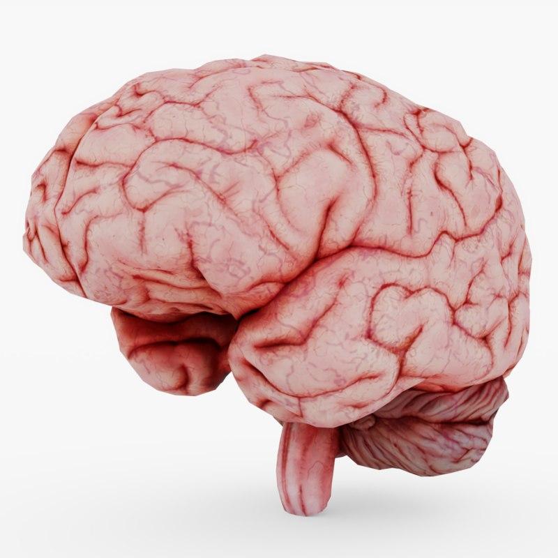3D halloween brain model
