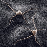 two neurons on a background 3D model